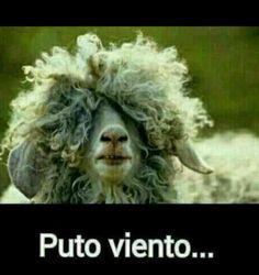 #viento