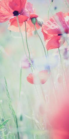fino-al-di-la-del-tutto:    Poppies by Adam Basiński