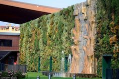 The huge wall garden, with a total of 44,000 plants covering a surface of 1263 square metres, was inaugurated in 2010 and the finished result at The Fiordaliso commercial complex was certified by Guinness Wold Records as being the largest vertical garden in the world this week. In Rozzano, Italy, near Milan