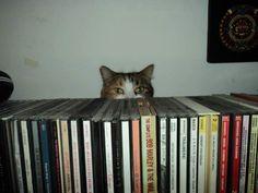 Peek-a-cat