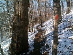 Mossy Ridge Trail at Percy Warner Park