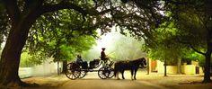 colonial williamsburg wedding horse drawn carriage