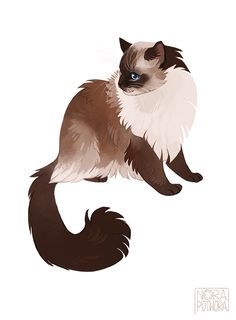 Nora Potwora : 05 of suggested cats ragdoll. Cute Animal Drawings, Animal Sketches, Cute Drawings, Warrior Cat Drawings, Warrior Cats Art, Kunst Inspo, Art Inspo, Art And Illustration, Illustrations
