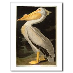 >>>Cheap Price Guarantee          	White Pelican, John James Audubon Postcard           	White Pelican, John James Audubon Postcard so please read the important details before your purchasing anyway here is the best buyThis Deals          	White Pelican, John James Audubon Postcard lowest pric...Cleck See More >>> http://www.zazzle.com/white_pelican_john_james_audubon_postcard-239347576302171026?rf=238627982471231924&zbar=1&tc=terrest