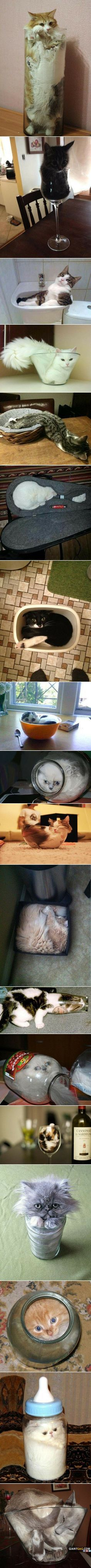 best tiere images on pinterest cute kitty funny animals and