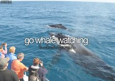 bucket list for girls I went whale watching once, in Wii... - A
