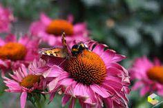 tuin bloemen ideeën - Google zoeken