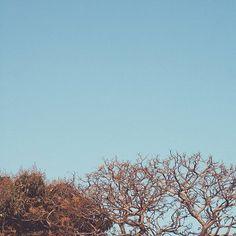 Sky  #vsco #vscocam #florest #nikon #light #photograph #photography #sky #ceu floresta #natureza #nature #moo #lua