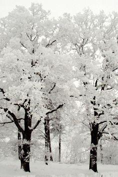 Winter Beauty | (10 Beautiful Photos)