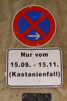 not a tradition, just a warning of the falling chestnuts