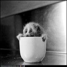 Cup ofLoris