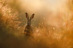 2020 GDT Nature Photographer of the Year Peter Lindel – A Hare's Dream. European hare in the north of Dortmund Photography Competitions, Photography Contests, Photography Awards, Wildlife Photography, Photography Reviews, Inspiring Photography, Digital Photography, Belle Photo Nature, Dead Forest