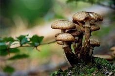[Mens sana in corpore sano] I funghi: proprietà, curiosità e ricette, di Francesca Gnemmi   Gli scrittori della porta accanto - Non solo libri