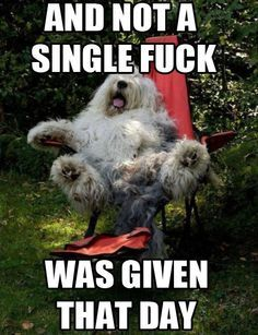Funny Pictures with Captions Funny Pictures With Captions, Funny Captions, Picture Captions, Funny Animal Pictures, Cute Funny Animals, Funny Photos, Funny Google Searches, Old English Sheepdog, Geek Humor