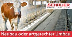 Diese Technik ist gut für die Tierfreundlichkeit und gleichzeitig arbeitssparend. Stallplanung, Stalltechnik und Stallbau. Rinder Stall, Farming System, Cow, Animals, Animales, Animaux, Cattle, Animal, Animais