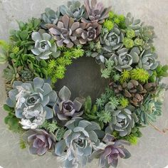 """Succulent wreath.  Im unsure of who made this beauty.  I think it may be Lisa from succulent create?  Another great living decoration.  Perfect for xmas…"""
