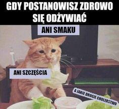 ) ) ( ( Y ) # Humor # amreading # books # wattpad Wtf Funny, Funny Memes, Jokes, Animal Memes, Funny Animals, Polish Memes, Happy Photos, Meme Faces, Good Mood