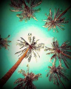 Palm Trees by rach.joyce84