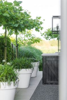The garden pots and also balcony covered with several shades and greenery could make you relax and for a minute to forget daily concerns. You could select garden pots which is plentiful with greenery or vivid garden packed with several kinds color. White Gardens, Small Gardens, Outdoor Gardens, Outdoor Plants, Landscape Design, Garden Design, Balcony Design, Garden Deco, Garden Planters