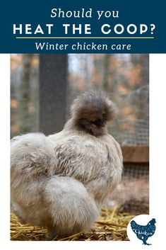 Should you heat the chicken coop this winter? Find out the pros and cons to adding heat to your coop. Chicken Coop Designs, Chicken Coop Plans, Building A Chicken Coop, Chicken Feed, Diy Chicken Coop, Chicken Treats, City Chicken, Raising Backyard Chickens, Backyard Poultry
