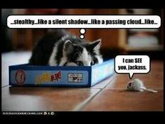 Love those sneaky cats!