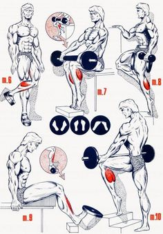 Personal Trainer - 5 Calve Workouts keep motivation for fitness Bodybuilding Training, Bodybuilding Workouts, Bodybuilding Motivation, Shoulder Training, Shoulder Workout, Gym Workout Tips, At Home Workouts, Workout Fitness, Muscle Fitness