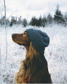 Фото с собакой в шапке зимой #картинки#фото#животные#собаки#зима#прогулка#вшапке#лес#стиль