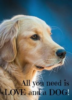 All you need is #love and a #dog! | #quote #saying www.fordogtrainers.com