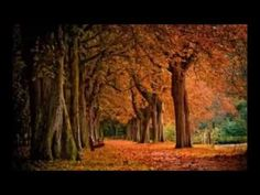 Outono By FjB