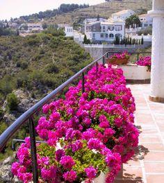 opter pour des géraniums en rose pour décorer le balcon