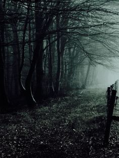 The good, the bad and the ugly story! by =Weissglut Beautiful World, Beautiful Places, Beautiful Pictures, Mystical Forest, Forest Path, Forest At Night, Dark Places, Nocturne, Belle Photo