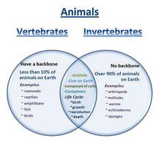 Learning Ideas - Grades K-8: Venn Diagram - Vertebrates and Invertebrates