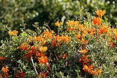 Bunch of orange Flowers growing Bunch of orange Flowers growing in the field.