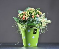 Cadou Martisor - Kalachoe la ghiveci  25 lei + TVA, CorporateBaskets.ro Planter Pots, Products, Beauty Products, Plant Pots