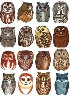 illustration, graphic, owls