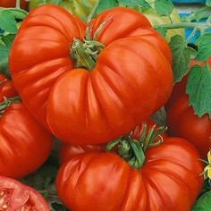 Tomato Beefsteak 40 Seeds per Packet by David's Garden Seeds, http://www.amazon.com/dp/B0055Q154E/ref=cm_sw_r_pi_dp_LeCOqb17S1H2Z
