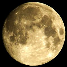 Banco de fotos www.tOrange-pt.com livres e grátis Lua  Tags - #Lua #Céu #Azul #noite #noite #círculo #brilhante #grosseiramente #floresta #medo #agulhas