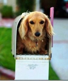 Beauty in a mailbox