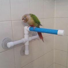Pets Parrots