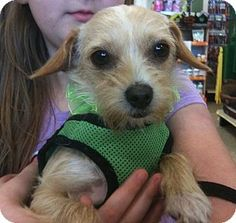 Pictures of Jill a Terrier (Unknown Type, Small) Mix for adoption in Fort Worth, TX who needs a loving home.