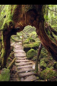Primeval Forest, Japan - Johna Beall Real Estate in Seattle