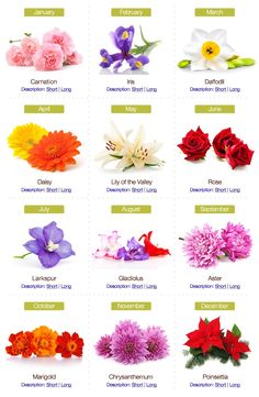 Birthday Flowers by Month - I am doing my family Birth Flowers on my shoulder...good idea whoever pinned this before me!