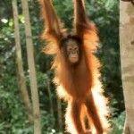 Malaysian Monkey! Read about Malaysia here...