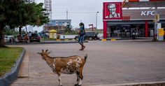 For The New York Times's West and Central Africa bureau chief, tastes of home in Dakar, Senegal, are a mixed blessing. Kfc Restaurant, Restaurant Recipes, Milk Duds, Fast Food Chains, Olive Gardens, Taste Of Home, Work Travel, Ny Times, Ghana