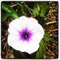 Roadside #flowers in #Thailand