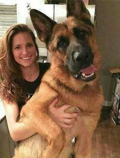http://ift.tt/2s7ckBP is My Dog?