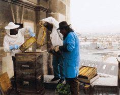 Rucher installé sur le toit de l'Opéra Garnier