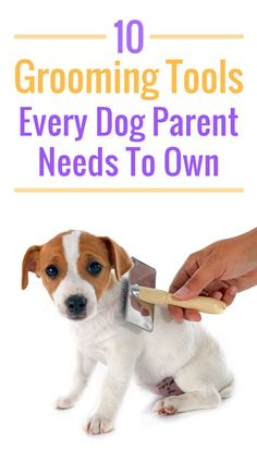 These 10 dog grooming tools are essential for pup parents. Keep your dog looking and feeling good!