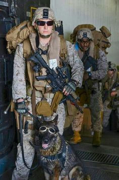 Heroism of U. military war dogs evealed in new book Heroism of U. military war dogs revealed in new book From your friends at phoenix dog in home dog training Army Dogs, Police Dogs, Military Working Dogs, Military Dogs, My Champion, Service Dogs, Mans Best Friend, Pets, Troops