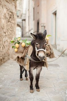Mule with Lemons / Ravello, Amalfi Coast, Italy°°